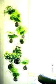 hanging plants on walls plant wall hangers indoor hanging plant wall plant wall hangers indoor hanging hanging plants on walls