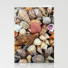 Seashell Collection From Florida Stationery Cards By Cynthiabphoto