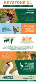 best ideas about wildlife conservation jobs major losses for wildlife if keystone xl is approved