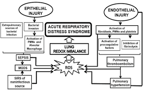 Ards Pathophysiology Flow Chart Acute Respiratory Failure Pathophysiological Basis From A