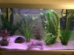 Betta Fish Tank Setup Ideas That Make A Statement!