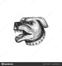 Rotvajler Pes Hlavu Vrčení Tetování Stock Fotografie Patrimonio