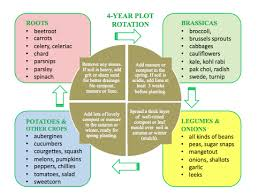 Crop Rotation Chart Vegetable Gardening Pin By Tricia Starks On Crops Crop Rotation Vegetable