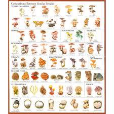 Oyster Identification Chart Comparison Between Similar Species Stuffed Mushrooms