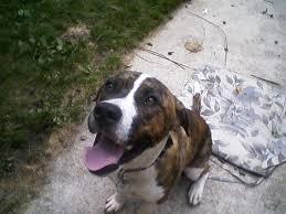 blind dog looking happy