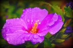 purple hibiscus essay topics report writing tips do my purple hibiscus essay topics