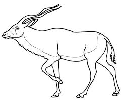 Small Picture Addax Antelope Animal Coloring Page Animal Images Of Antelopes