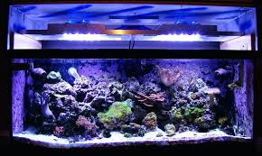 reef tank led lighting times system schedule light