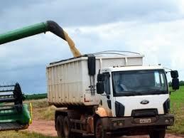 Resultado de imagem para Maranhão primeiro lugar colheita de grãos