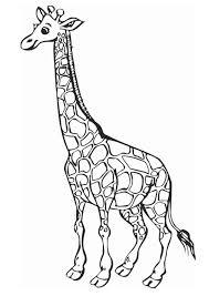 Kleurplaat Giraffe Tropicalweather