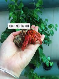 Ốc Mượn Hồn - shop Nghĩa Nhi - TP.Hồ Chí Minh - Posts