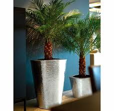 small office plant. Plants For Offices By Ambius Small Office Plant