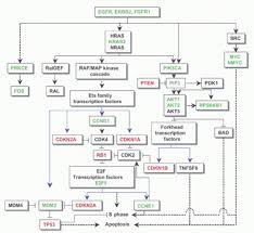 schematic presentation readingrat net Points Wiring Diagram schematic presentation of normal massage points the wiring diagram, schematic,schematic presentation points ignition wiring diagram