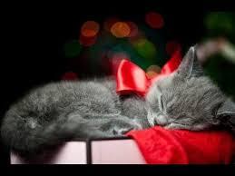 Image result for christmas kitten