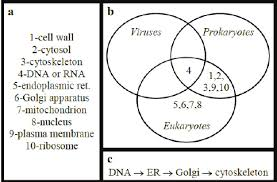 Venn Diagram Comparing Dna And Rna Cell Components Word List A With Applications To Venn