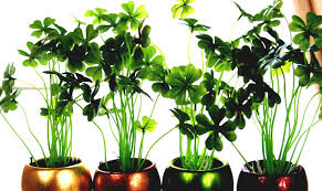 decorative plants for office. Large Office Plants Home Design Ideas And Pictures Beautiful Tall Indoor House Interior Inside Decorative Pots For H