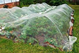 garden netting lowes. Garden Net Strawberry Patch Netting Lowes .