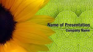 Summer Powerpoint Templates Sunflower Background Powerpoint Templates Sunflower