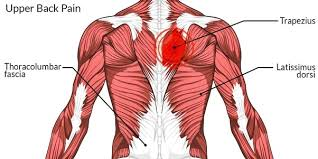 Another unreleased cut, this time a quick overview of the muscles of the upper back, a region that many of us find very difficult so i hope this helps! How To Relieve Muscle Pain In My Upper Back Quora