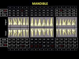 Periodontal Examination Chart Of The Patient 5 Years After