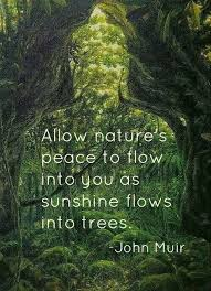 Best Nature Quotes Stunning Quotes Nature New Best 48 Mother Nature Quotes Ideas On Pinterest