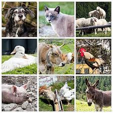 real farm animals collage.  Animals Intended Real Farm Animals Collage A