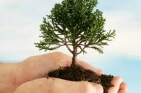 Image result for تصویر در مورد روز درختکاری