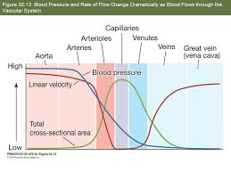 54 figure 32 13 blood pressure and rate of flow change dramatically as blood flows through the vascular system