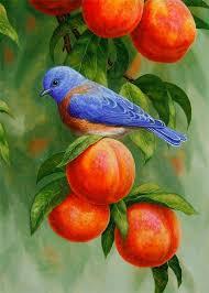 bluebird art bluebird and peaches greeting card 2 by crista forest