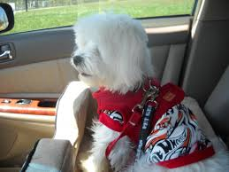 1 jpg pet gear dog booster car seats best jpg