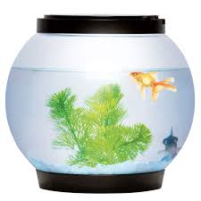 office desk fish tank. Office Fish. 5-litre-glass-fish-tank-bowl-aquarium Desk Fish Tank