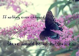 Butterfly Quotes Impressive 48 Images About Everything Butterfly48s On Pinterest Mackinac
