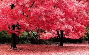 Hd nature wallpapers, Beautiful nature ...