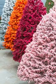 Flocked Christmas Tree Multi Colored Flocked Christmas Trees Stock Photo Picture And