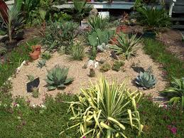 Small Picture Cactus garden pictures