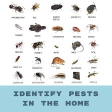 decatur pest control. Perfect Control Use This Guide To Help Determine Which Pests Are Crawling Around In Your  Home If You See One Chances There Many More Canu0027t  Inside Decatur Pest Control T