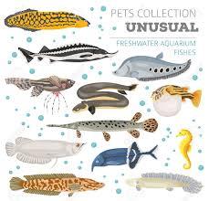 Freshwater Fish Chart Unusual Freshwater Aquarium Fish Breeds Icon Set Flat Style Isolated