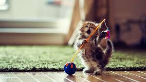 cute baby cat hd wallpaper 555477