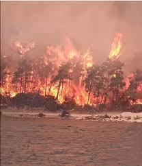 Yangın çıkan iller: Antalya, Adana, Mersin,Muğla, Osmaniye ve Kayseri 'de  orman yangınları