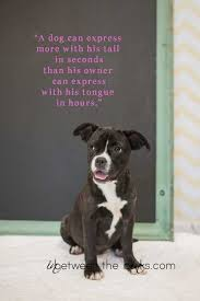 Quotes About A Girl And Her Dog Impressive Quotes About A Girl And Her Dog Brilliant Quotes About A Girl And