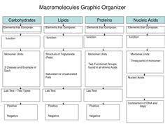 Biological Macromolecules Chart 76 Best Macromolecules Images Teaching Biology Biology