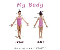 Human Body Parts Chart In English Royalty Free Body Part Chart Stock Images Photos Vectors