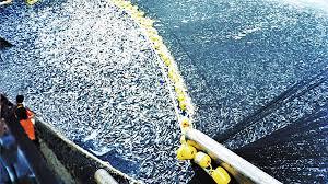 Image result for La sur-pêche épuise la ressource halieutique,