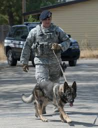 best images about usaf k iers in laws and 17 best images about usaf k9 iers in laws and training