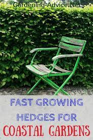 fast growing hedges for seaside gardens