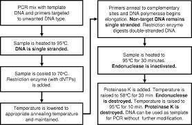 Suicide Polymerase Endonuclease Restriction A Novel Technique For