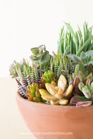 Terra cotta is such a great choice for growing succulents