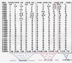 Weight Chart Standard Poodle Bedowntowndaytona Com