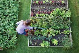 start your own soup garden gardening diy easy balcony patio potatoes kale parsley