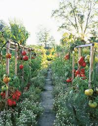 Small Picture Garden Ideas Pinterest Best Ideas About Small Vegetable Gardens